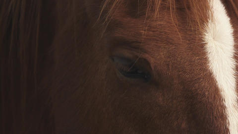 Sardinia Horse, Italy Stock Video Footage