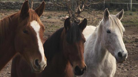 Sardinia Horses, Italy Stock Video Footage
