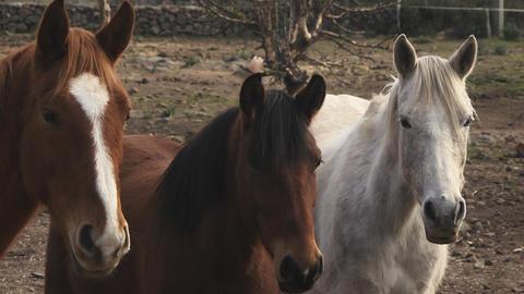 Sardinia Horses, Italy Footage