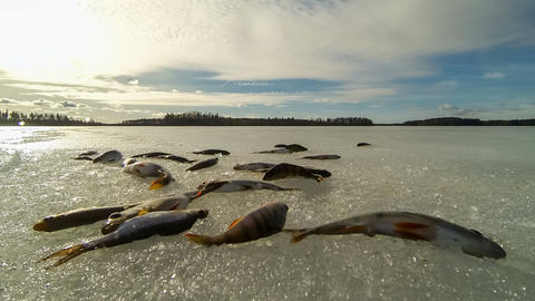 Time-lapse video of small fish jumping on ice Stock Video Footage