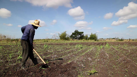 Agriculture And Men Working In The Fields Black Pe stock footage