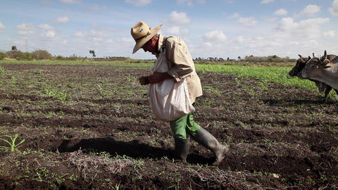 Manual and Agricultural Work Group of Cuban Men Working... Stock Video Footage