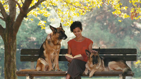 People Working As Dog Sitter with Alsatian Dog in Stock Video Footage
