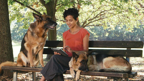 People Working As Dog Sitter with Alsatian Dog in park Footage