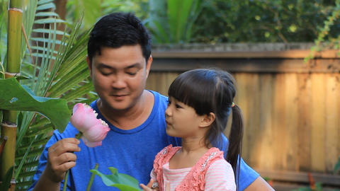 pink lotus in our flower garden Footage