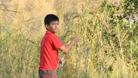 Young child is playing with kite Footage