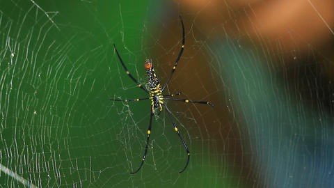 boy look at spider Stock Video Footage