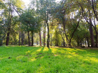 Sunny day in the park. Time Lapse. 320x240 Stock Video Footage