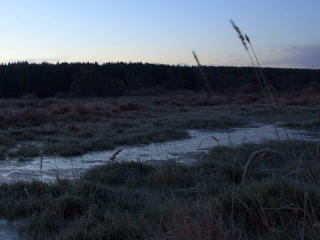Dawn over the frozen swamp. Time Lapse. 320x240 Stock Video Footage