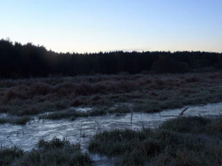 Dawn over the frozen swamp. Zoom. Time Lapse. 320x Stock Video Footage