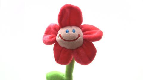 Talking Flower Footage