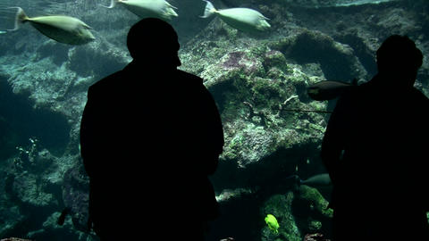 Visitors At The Aquarium stock footage