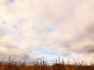 Clouds over dry grass. Time Lapse. 320x240 Footage