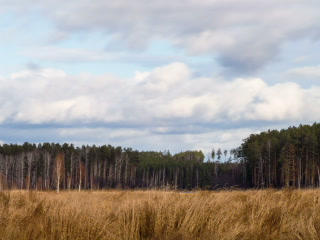 Clouds over the pine forest. Time Lapse. 320x240 Footage