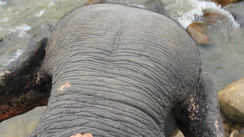 Form the back of asian elephant Footage