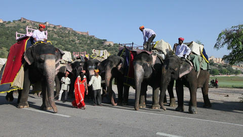 Elephants waiting to carry tourists at Amber Fort  Footage