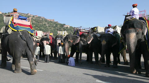 Elephants Waiting To Carry Tourists At Amber Fort  stock footage