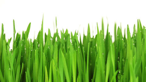 Green Grass with Drops Footage