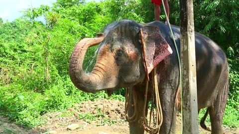 Washing the elephant Footage
