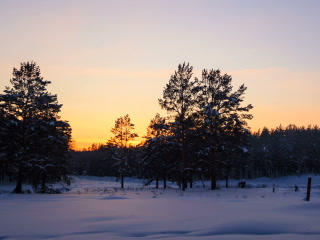 Sun sets over the forest. Stars appear. Panarama.  Footage