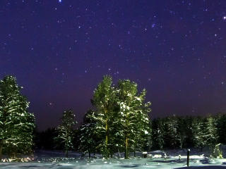 Stars Over The Winter Forest. Time Lapse. 320x240 stock footage
