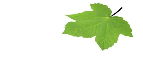 Falling leaf Animation