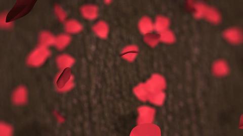 Falling petals Animation