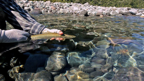 Guide catch and releasing a rainbow trout while fl Footage