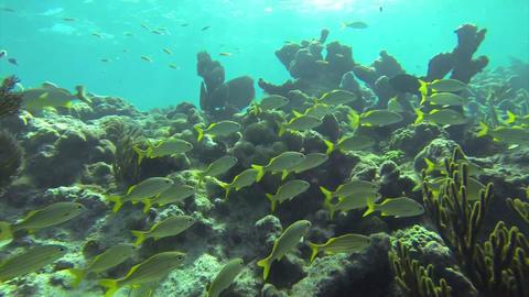 Beautiful tropical fish swim around a reef underwa Footage