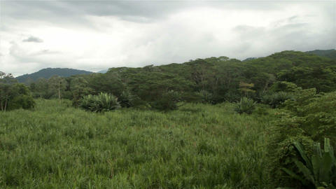 Pan across a jungle scene in Costa Rica Footage