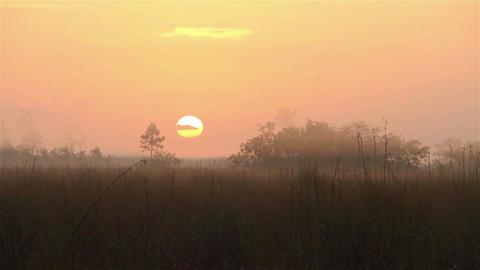 Sunrise over the Florida Everglades Footage