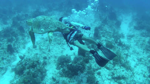 A beautiful shot of a diver swimming with sea turt Footage