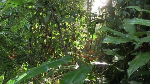 A slow tilt down in a beautiful jungle rainforest Footage