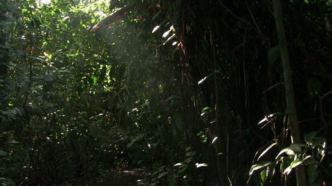 A slow tilt up in a beautiful lush jungle rainfore Footage
