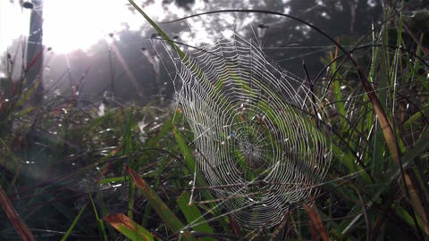 A dewy orb spider web in morning sun Footage
