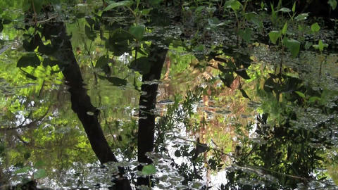 Reflections of a forest in a puddle of water Footage