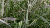 Grass On Wind Close Up Abstract Background stock footage