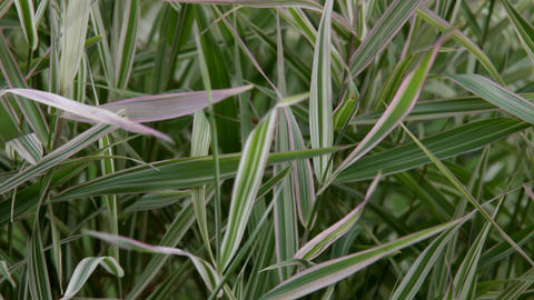 Grass on wind close up abstract background Stock Video Footage