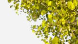 Aspen Branch At Wind stock footage