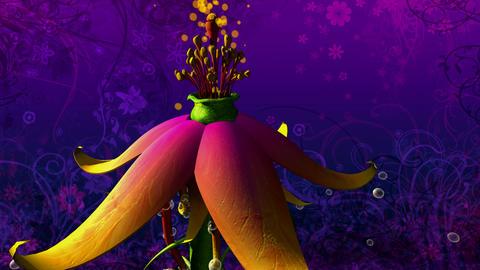 flipside flower Stock Video Footage