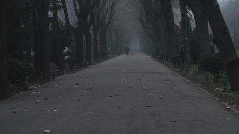 Still Shot Of A Misty Alley In Cismigiu Park Footage