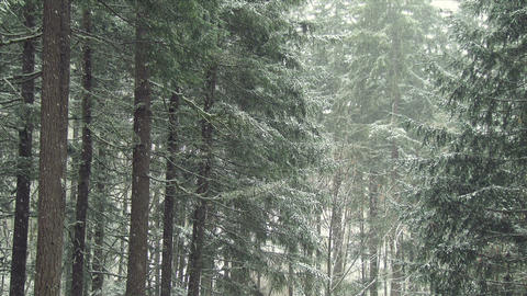 Snow Fall in a Forest Footage