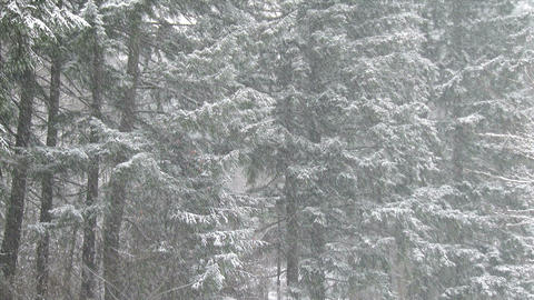 Heavy Snowfall in a Forest Live Action