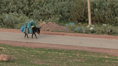 Moroccan Donkey Carries Gas Cans - FT0037 stock footage