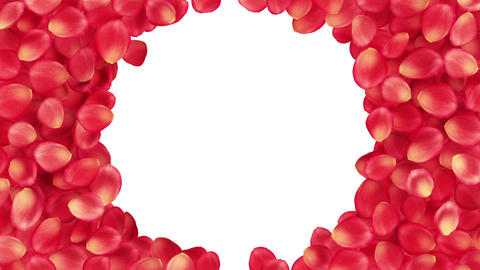 Beautiful Rose-petals Transition. Useful For Greet stock footage