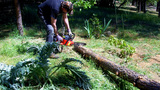 Man Sawing With Dull Chain Saw stock footage