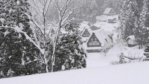 Snow falling on the tree,in Toyama,Japan Footage