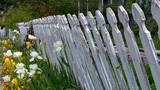 Old White Pickett Fence With Flowers stock footage