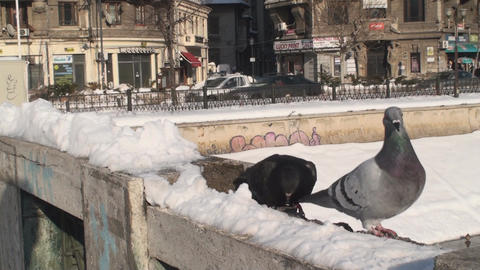 Pigeons Pecking For Food In Snow And Traffic Footage