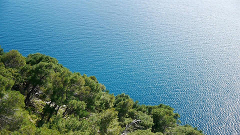 Pine Trees Above Blue Sea stock footage